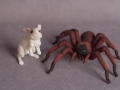 Tarantula and Rabbit