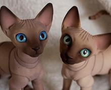http://pets.evethecat.com/wp-content/uploads/2014/01/shpinxs.jpg